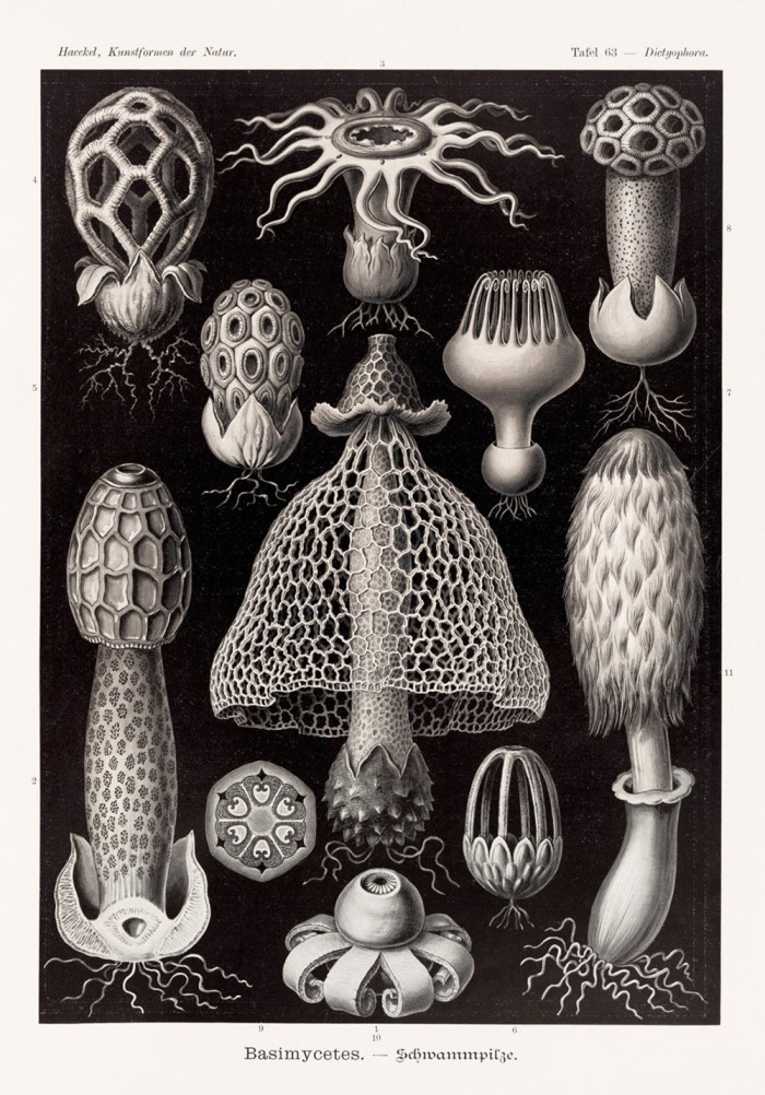 xl_haeckel_p620_1708161610_id_1141299-1